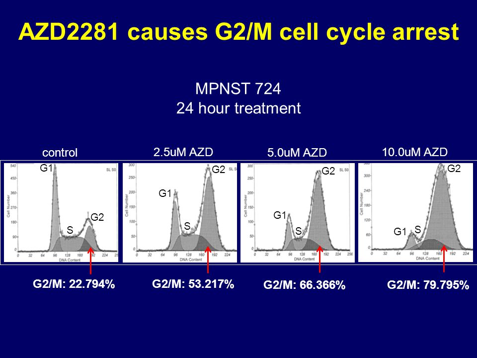 AZD2281 causes G2/M cell cycle arrest control 2.5uM AZD 5.0uM AZD 10.0uM AZD G2/M: 53.217% G2/M: 66.366% G2/M: 79.795% G2/M: 22.794% MPNST 724 24 hour treatment G1 S G2 G1 S S S G2