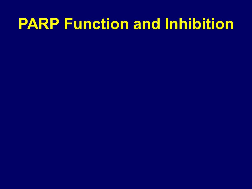 PARP Function and Inhibition
