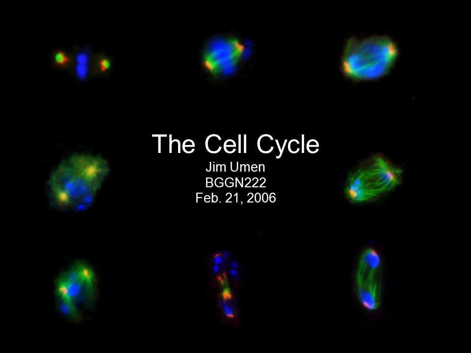 The Cell Cycle Jim Umen BGGN222 Feb. 21, 2006