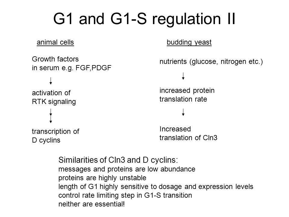 G1 and G1-S regulation II animal cells Growth factors in serum e.g. FGF,PDGF activation of RTK signaling transcription of D cyclins budding yeast nutr