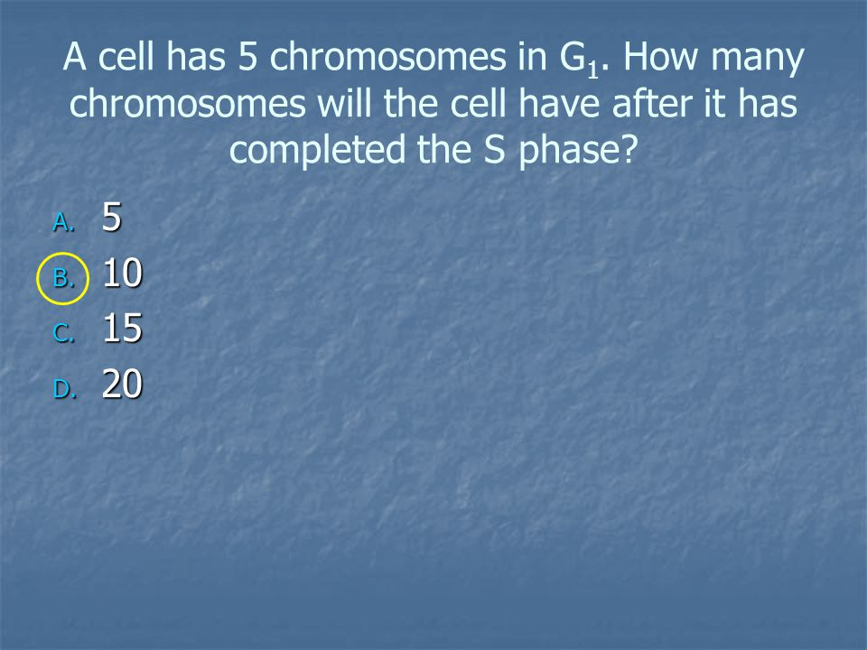 A cell has 5 chromosomes in G 1.