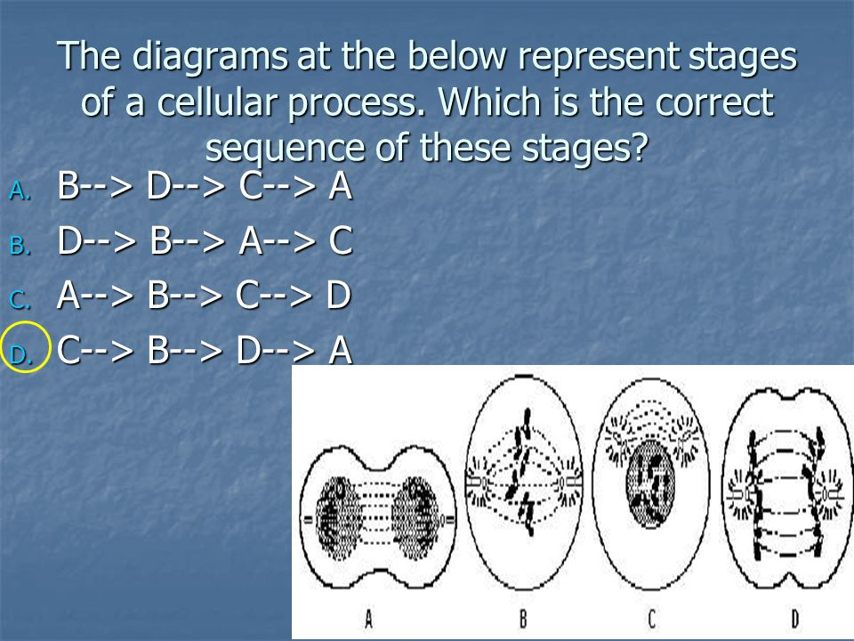 The diagrams at the below represent stages of a cellular process.