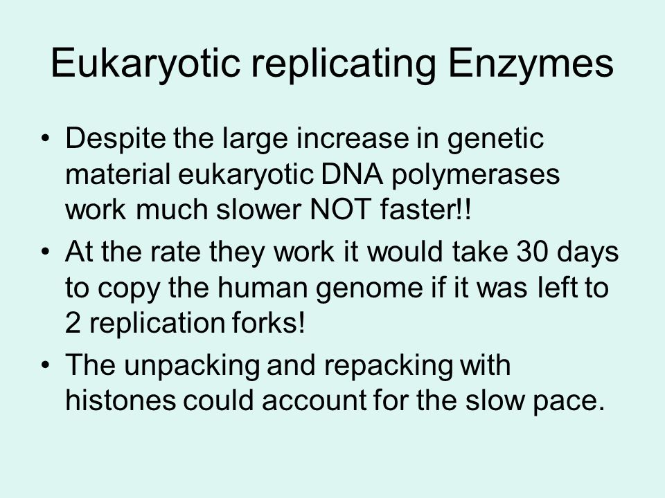 Eukaryotic replicating Enzymes Despite the large increase in genetic material eukaryotic DNA polymerases work much slower NOT faster!! At the rate the