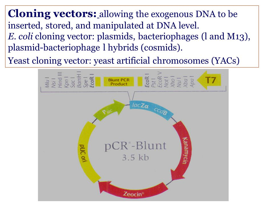 Types of vectors Cloning vectors Expression vectors Integration vectors G1 DNA cloning: An Overview