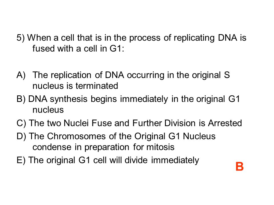 5) When a cell that is in the process of replicating DNA is fused with a cell in G1: A)The replication of DNA occurring in the original S nucleus is terminated B) DNA synthesis begins immediately in the original G1 nucleus C) The two Nuclei Fuse and Further Division is Arrested D) The Chromosomes of the Original G1 Nucleus condense in preparation for mitosis E) The original G1 cell will divide immediately B