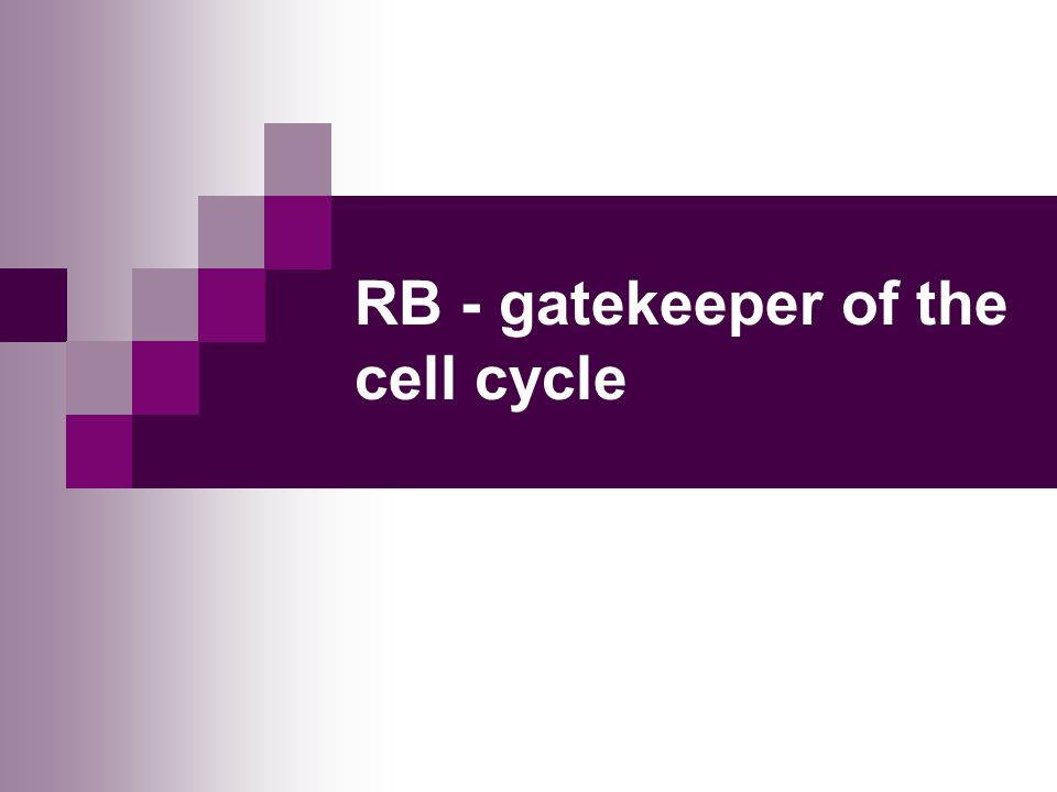 RB - gatekeeper of the cell cycle
