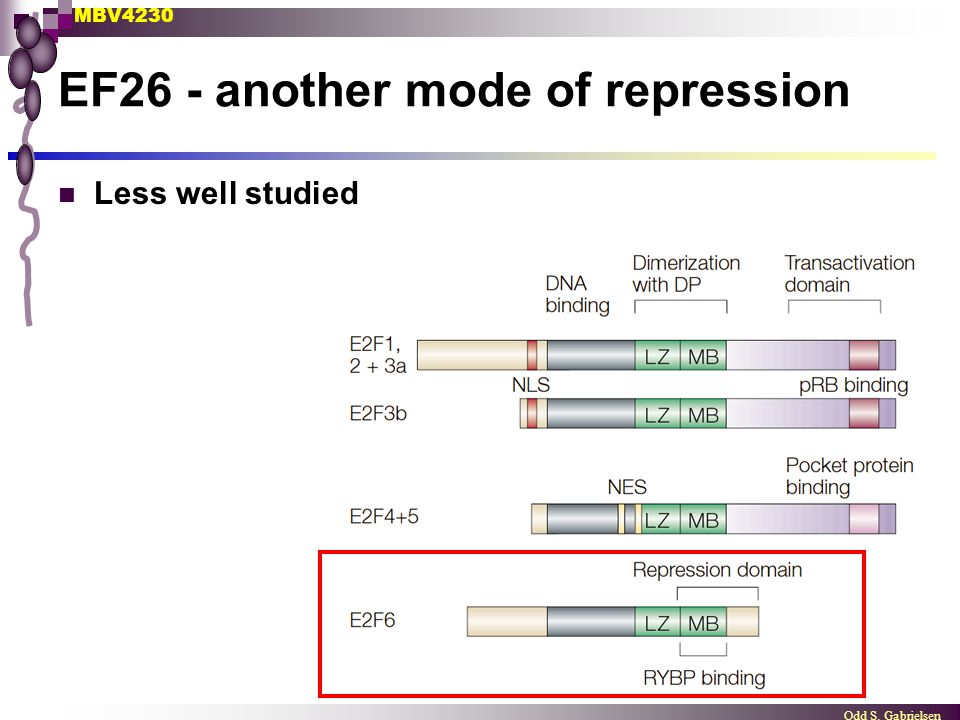 MBV4230 Odd S. Gabrielsen EF26 - another mode of repression Less well studied