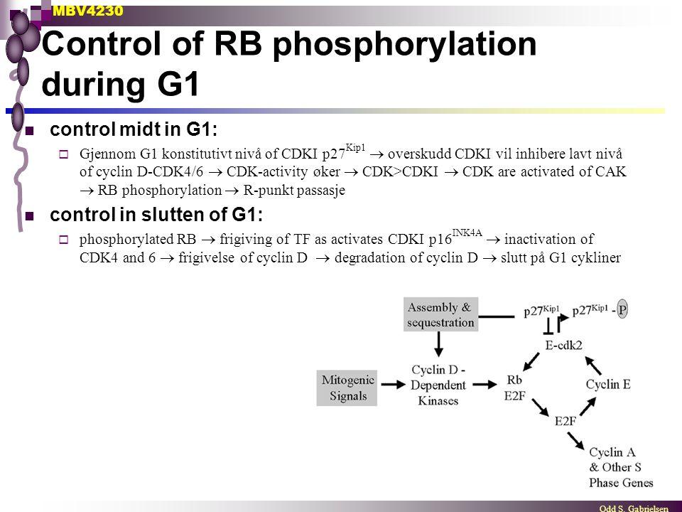 MBV4230 Odd S. Gabrielsen Control of RB phosphorylation during G1 control midt in G1:  Gjennom G1 konstitutivt nivå of CDKI p27 Kip1  overskudd CDKI