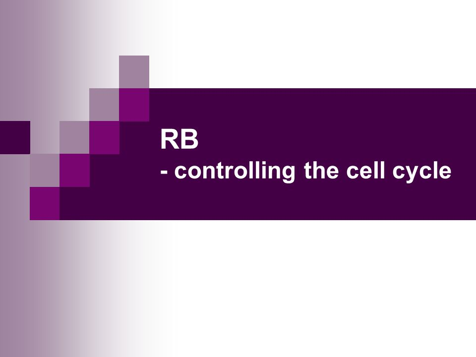 RB - controlling the cell cycle