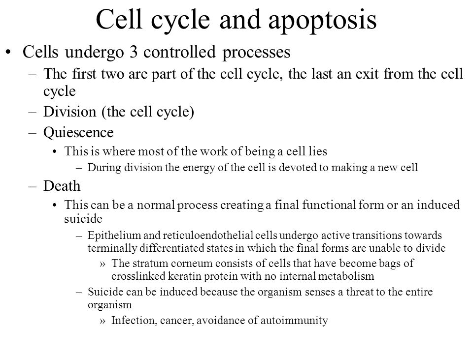 Cell cycle and apoptosis Cells undergo 3 controlled processes –The first two are part of the cell cycle, the last an exit from the cell cycle –Divisio