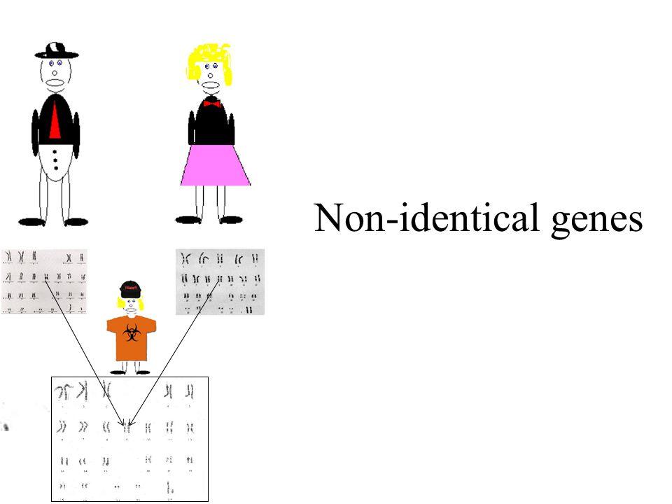 Non-identical genes