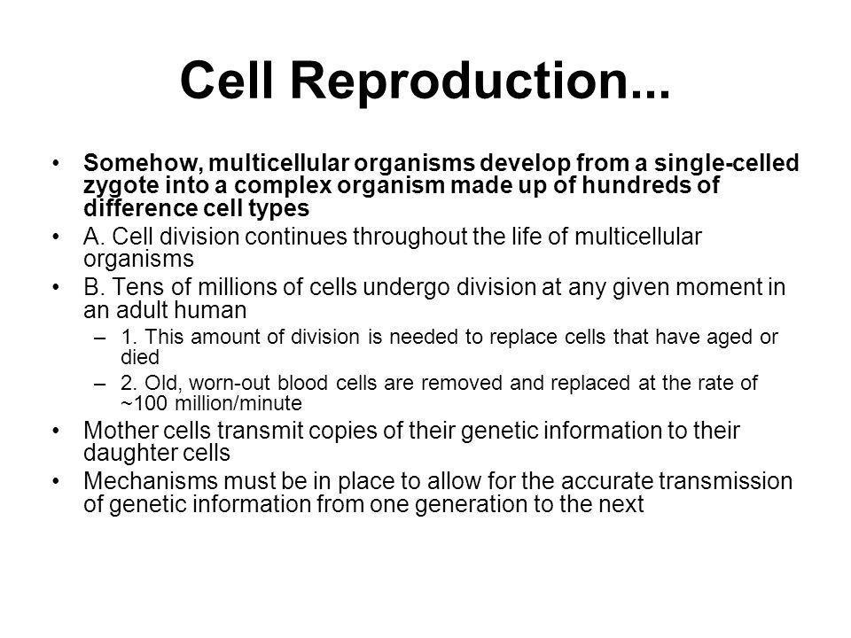 Cell Reproduction...