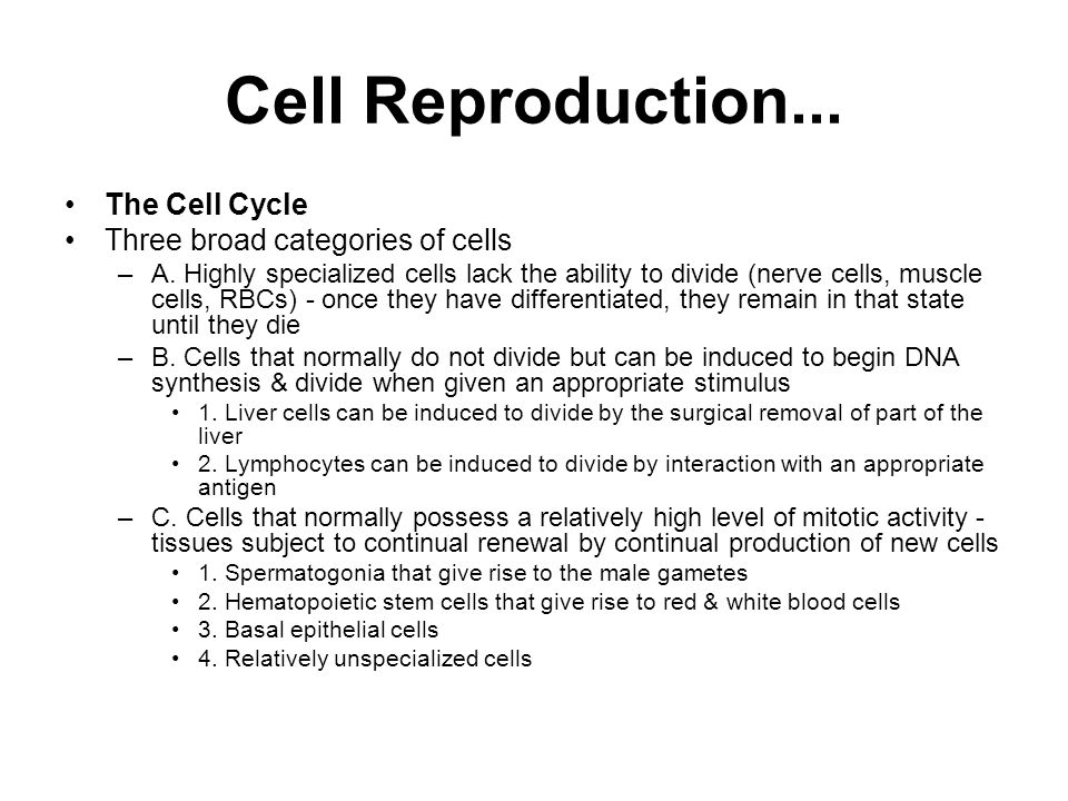 Cell Reproduction...The Cell Cycle Three broad categories of cells –A.
