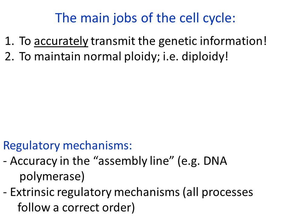 The main jobs of the cell cycle: 1.To accurately transmit the genetic information! 2.To maintain normal ploidy; i.e. diploidy! Regulatory mechanisms: