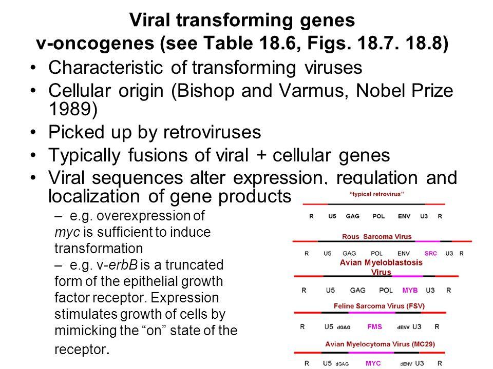 Viral transforming genes v-oncogenes (see Table 18.6, Figs. 18.7. 18.8) Characteristic of transforming viruses Cellular origin (Bishop and Varmus, Nob