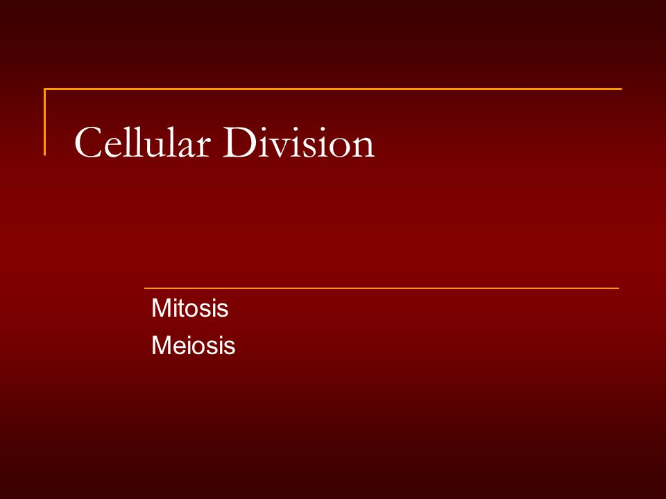 Cellular Division Mitosis Meiosis