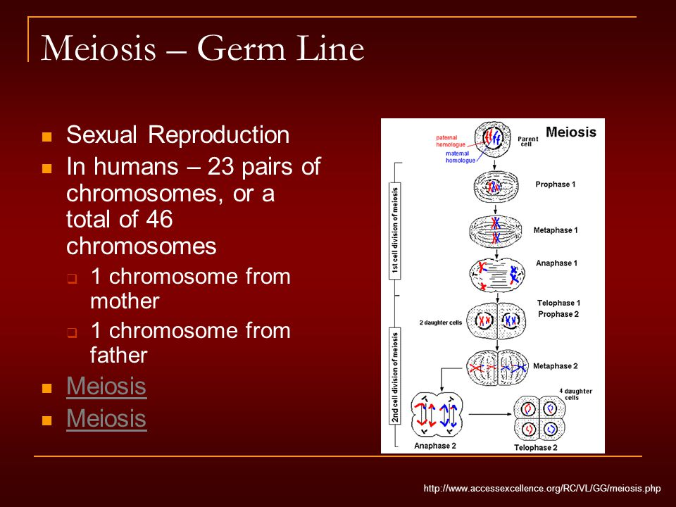 Meiosis – Germ Line Sexual Reproduction In humans – 23 pairs of chromosomes, or a total of 46 chromosomes  1 chromosome from mother  1 chromosome from father Meiosis http://www.accessexcellence.org/RC/VL/GG/meiosis.php