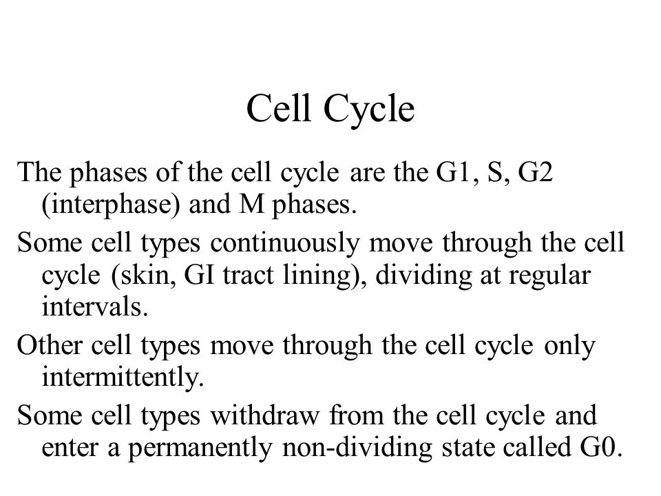 Cell Cycle The phases of the cell cycle are the G1, S, G2 (interphase) and M phases.