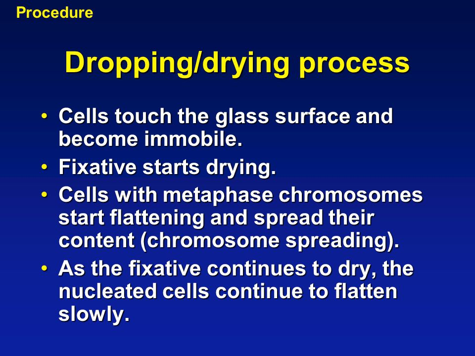 Dropping/drying process Cells touch the glass surface and become immobile.Cells touch the glass surface and become immobile. Fixative starts drying.Fi