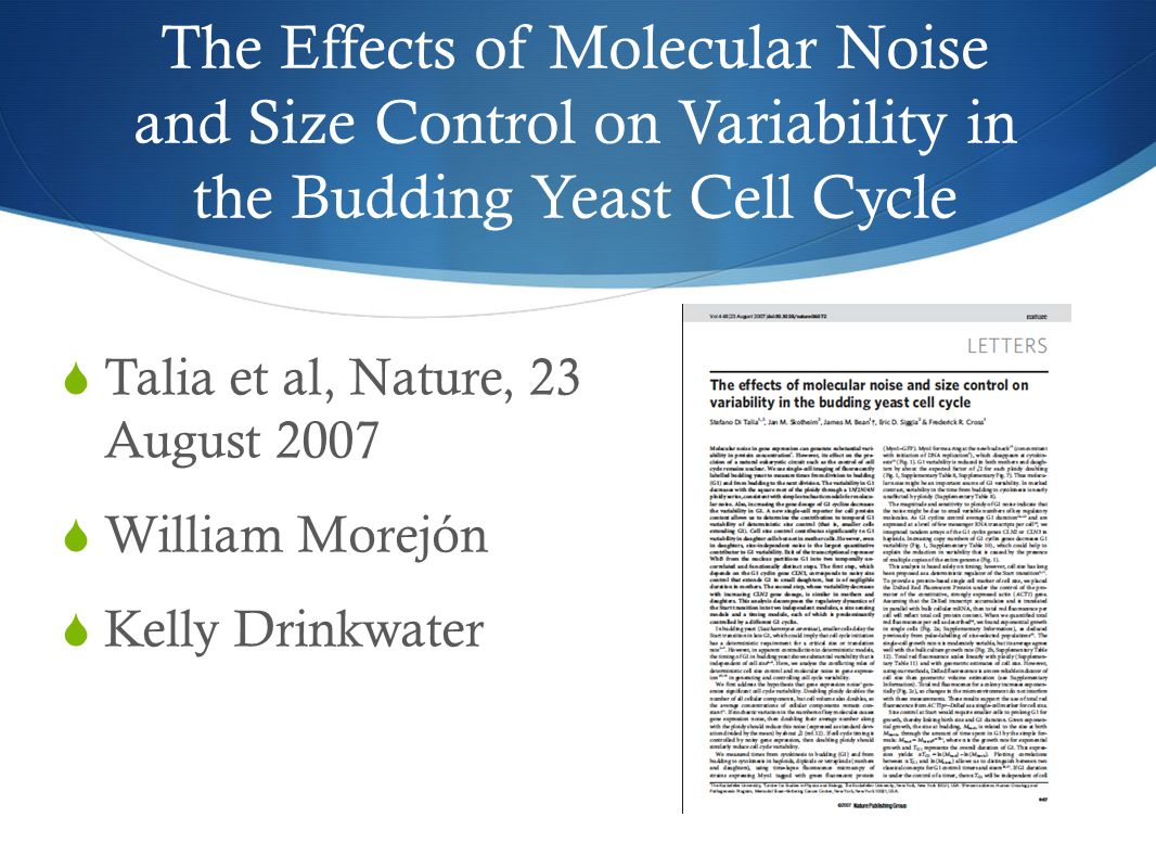 The Effects of Molecular Noise and Size Control on Variability in the Budding Yeast Cell Cycle  Talia et al, Nature, 23 August 2007  William Morejón