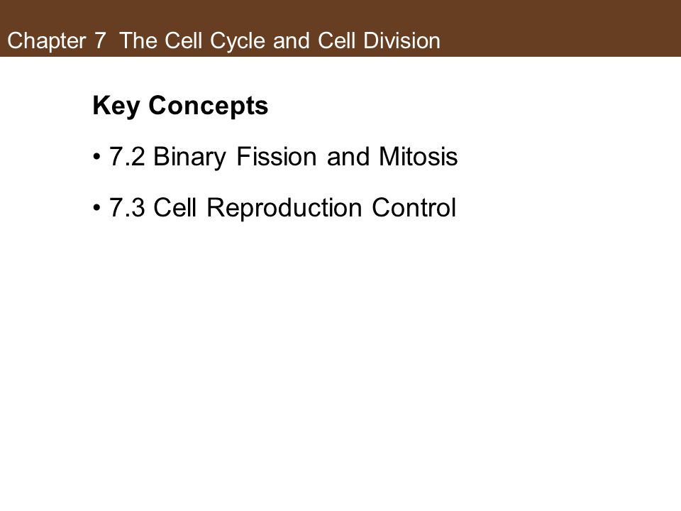 Chapter 7 The Cell Cycle and Cell Division Key Concepts 7.2 Binary Fission and Mitosis 7.3 Cell Reproduction Control