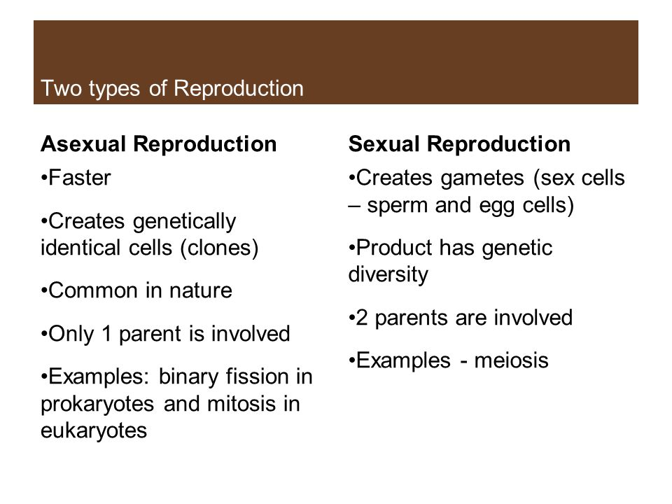 Two types of Reproduction Asexual Reproduction Faster Creates genetically identical cells (clones) Common in nature Only 1 parent is involved Examples: binary fission in prokaryotes and mitosis in eukaryotes Sexual Reproduction Creates gametes (sex cells – sperm and egg cells) Product has genetic diversity 2 parents are involved Examples - meiosis