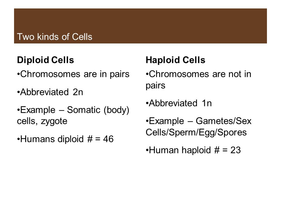 Two kinds of Cells Diploid Cells Chromosomes are in pairs Abbreviated 2n Example – Somatic (body) cells, zygote Humans diploid # = 46 Haploid Cells Ch