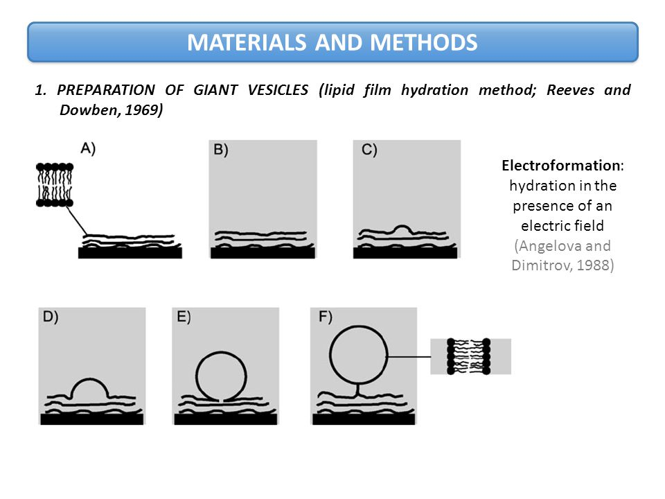 MATERIALS AND METHODS 1.