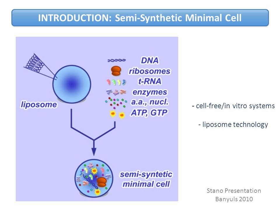 Stano Presentation Banyuls 2010 - cell-free/in vitro systems - liposome technology INTRODUCTION: Semi-Synthetic Minimal Cell