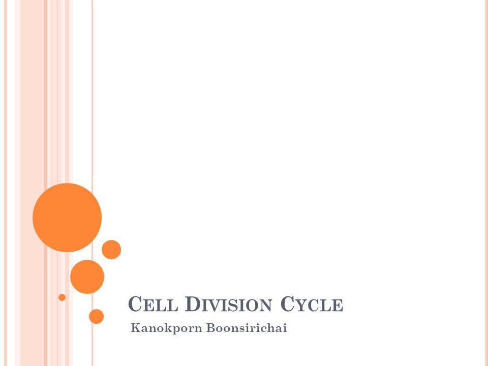 C ELL D IVISION C YCLE Kanokporn Boonsirichai