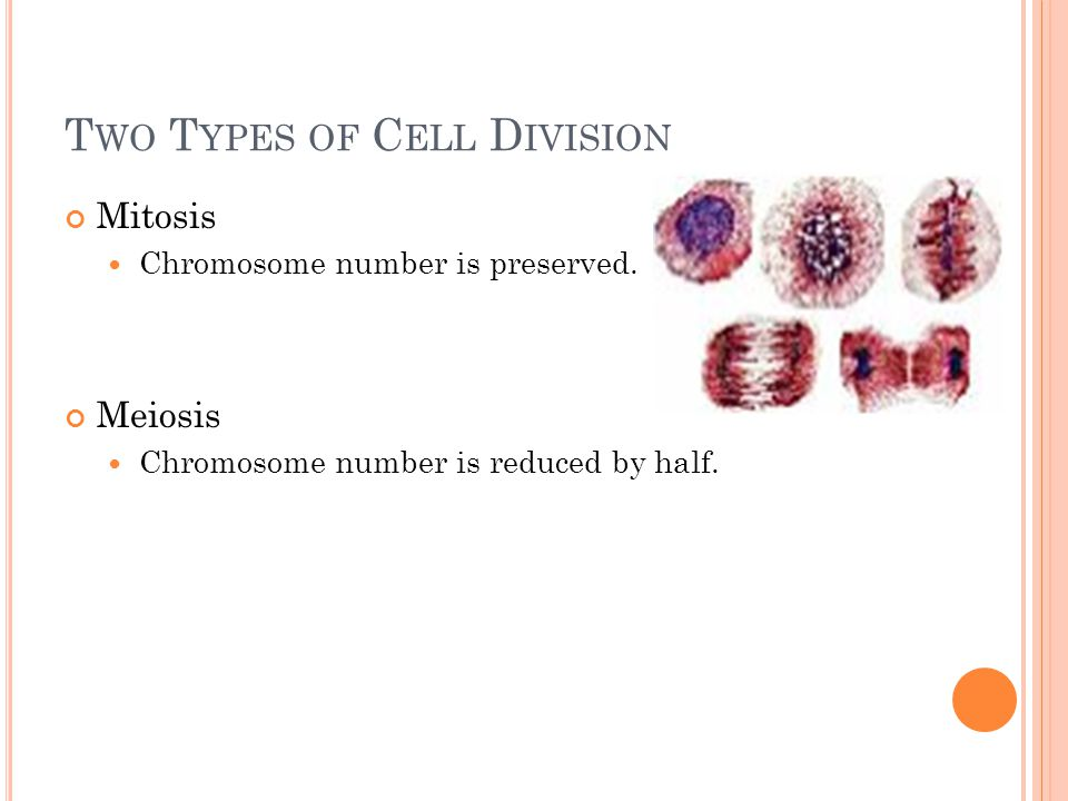 T WO T YPES OF C ELL D IVISION Mitosis Chromosome number is preserved.