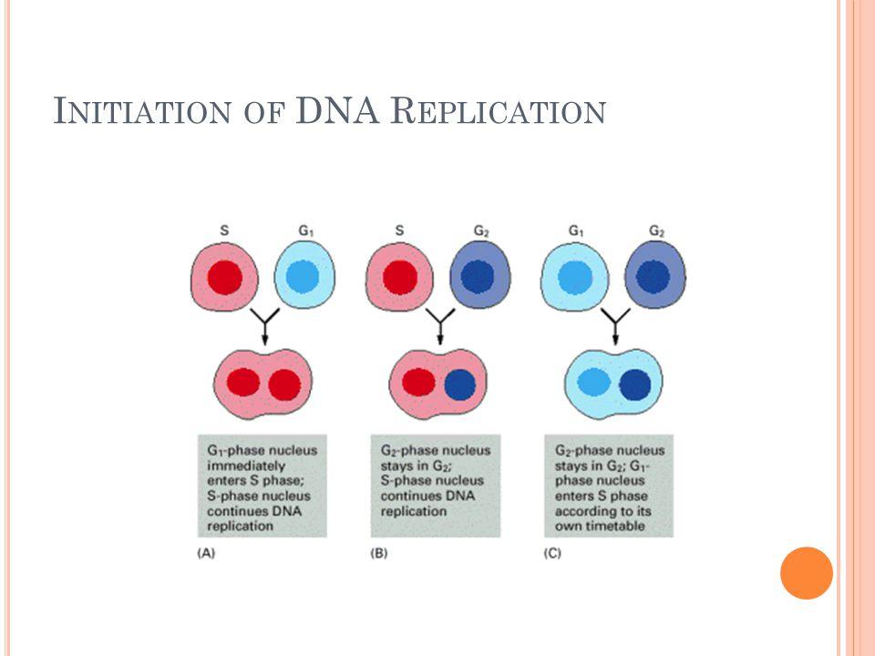 I NITIATION OF DNA R EPLICATION