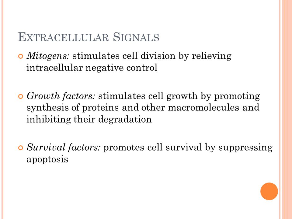 E XTRACELLULAR S IGNALS Mitogens: stimulates cell division by relieving intracellular negative control Growth factors: stimulates cell growth by promo