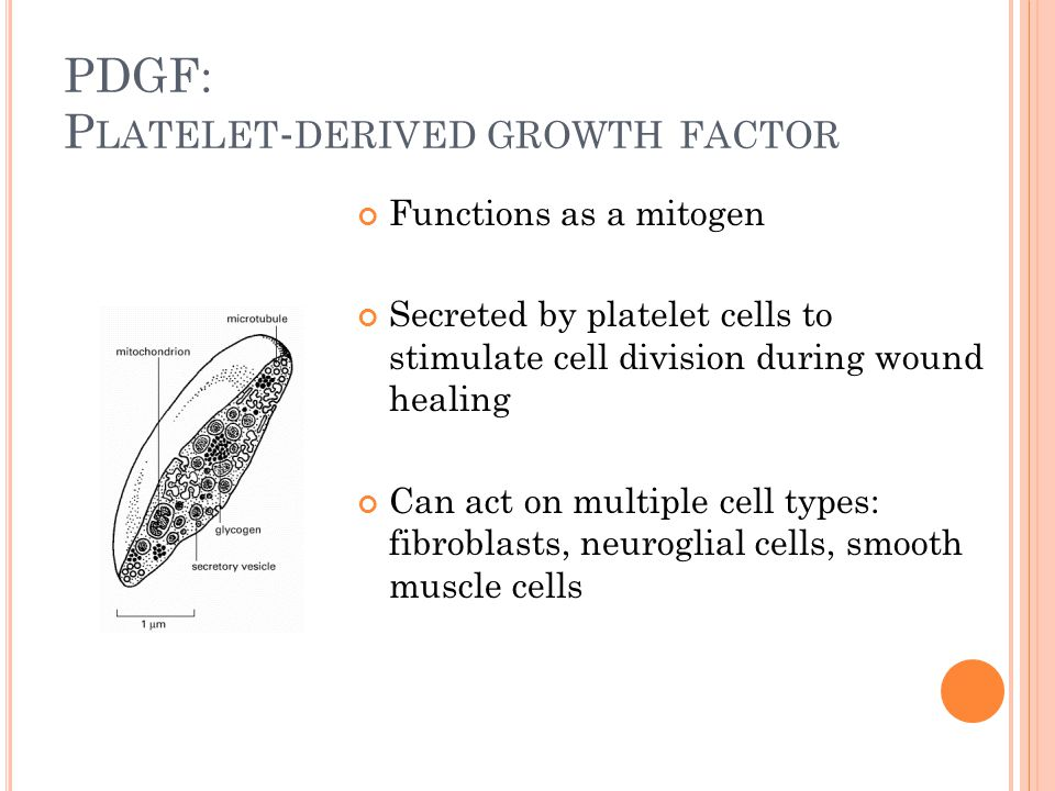 PDGF: P LATELET - DERIVED GROWTH FACTOR Functions as a mitogen Secreted by platelet cells to stimulate cell division during wound healing Can act on m