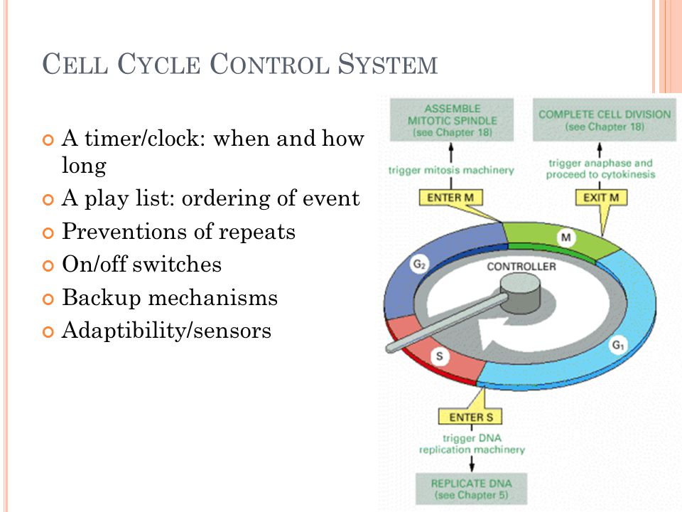 C ELL C YCLE C ONTROL S YSTEM A timer/clock: when and how long A play list: ordering of event Preventions of repeats On/off switches Backup mechanisms Adaptibility/sensors