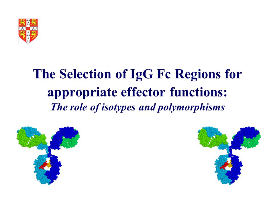 The Selection of IgG Fc Regions for appropriate effector functions: The role of isotypes and polymorphisms