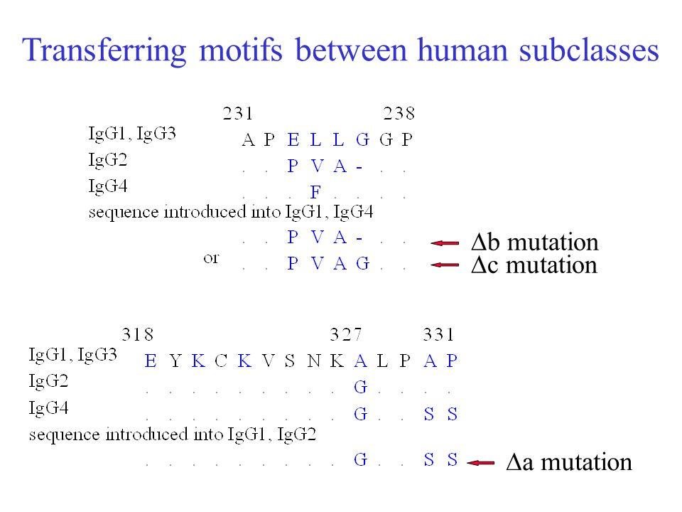Transferring motifs between human subclasses  b mutation  c mutation  a mutation