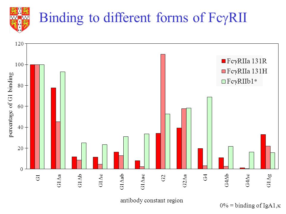 Binding to different forms of Fc  RII antibody constant region percentage of G1 binding 0% = binding of IgA1,  0 20 40 60 80 100 120 G1 G1  aG1  b