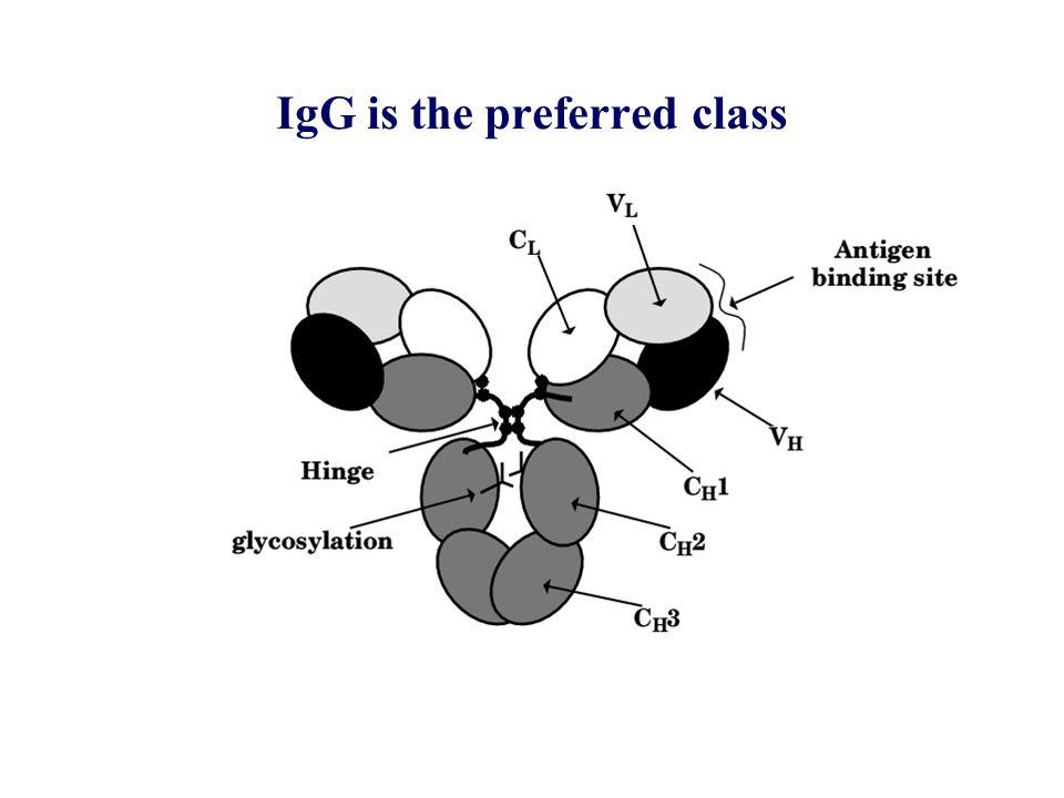 Chemiluminescent response of human monocytes to sensitised RBC -20 0 20 40 60 80 100 120 140 050001000015000200002500030000 antibody molecules/cell % chemiluminescence G1 G1  a G1  b G1  c G1  ab G1  ac G2 G2  a G4 G4  b G4  c Fog-1 antibodies