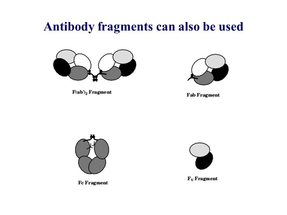 Elimination of the immunogenicity of therapeutic antibodies.