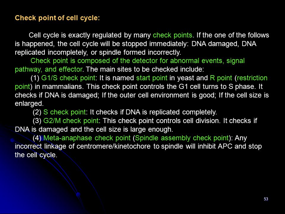 53 Check point of cell cycle: Cell cycle is exactly regulated by many check points.