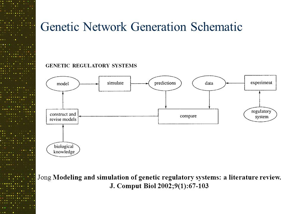Genetic Network Generation Schematic Jong Modeling and simulation of genetic regulatory systems: a literature review.