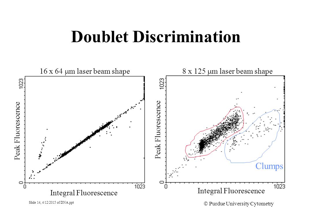 Slide 14, 4/12/2015 of DNA.ppt  Purdue University Cytometry Laboratories Doublet Discrimination Integral Fluorescence Peak Fluorescence 8 x 125  m laser beam shape16 x 64  m laser beam shape Clumps