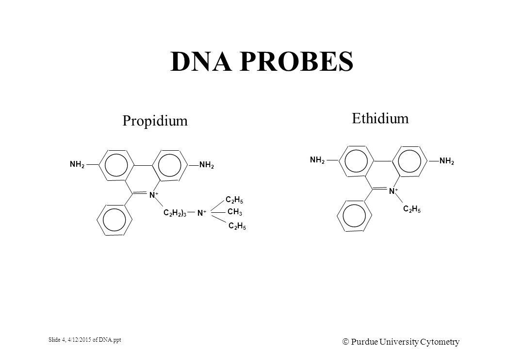 Slide 4, 4/12/2015 of DNA.ppt  Purdue University Cytometry Laboratories DNA PROBES N+N+ C2H5C2H5 NH 2 Ethidium N+N+ C2H2)3C2H2)3 NH 2 N+N+ C2H5C2H5 CH 3 C2H5C2H5 Propidium