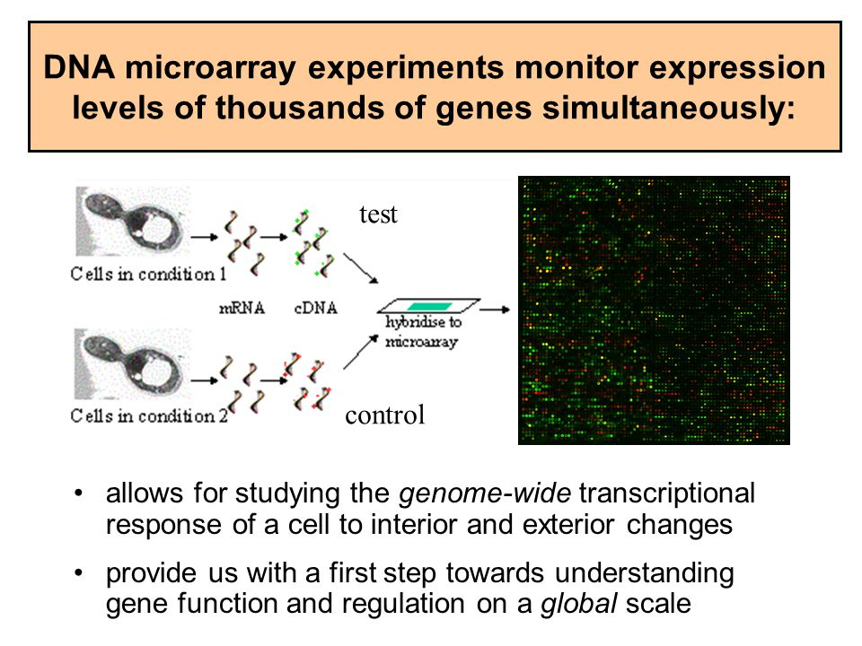 DNA microarray experiments monitor expression levels of thousands of genes simultaneously: allows for studying the genome-wide transcriptional respons