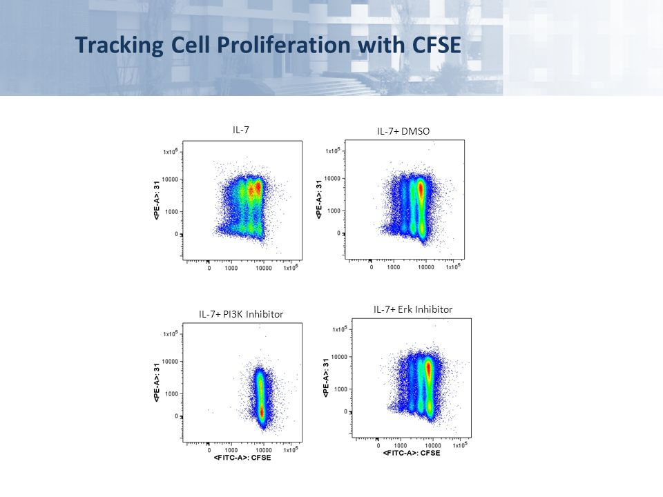 Tracking Cell Proliferation with CFSE IL-7 IL-7+ DMSO IL-7+ PI3K Inhibitor IL-7+ Erk Inhibitor
