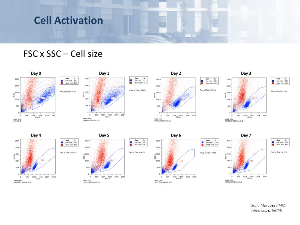 Cell Activation FSC x SSC – Cell size Sofia Marques (IMM) Filipa Lopes (IMM)