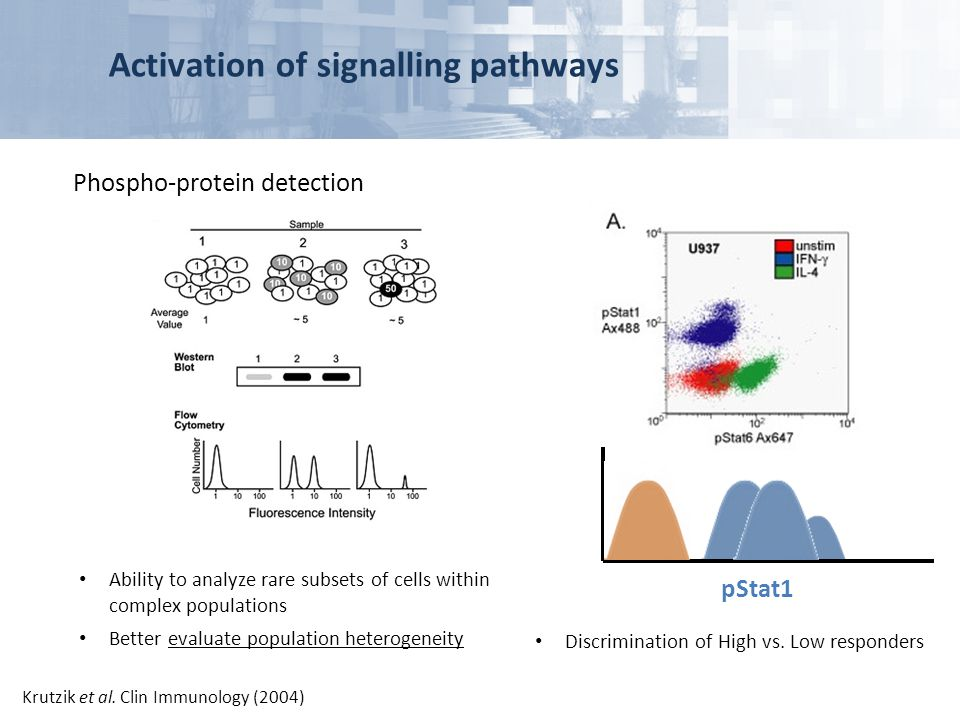 Activation of signalling pathways Phospho-protein detection Ability to analyze rare subsets of cells within complex populations Better evaluate popula