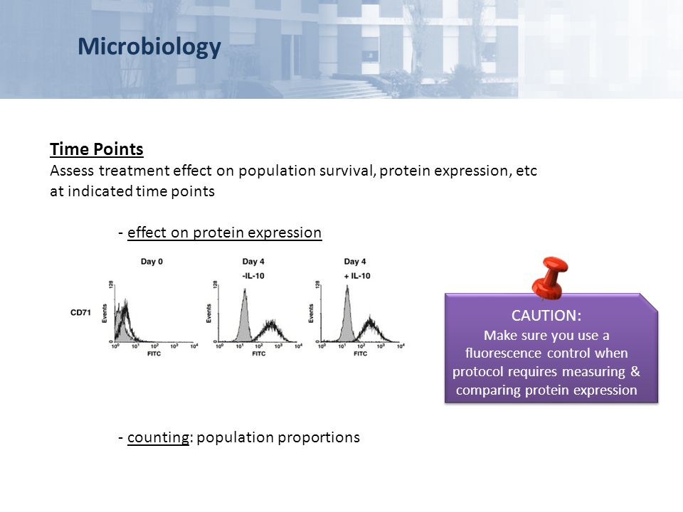 Time Points Assess treatment effect on population survival, protein expression, etc at indicated time points - effect on protein expression - counting
