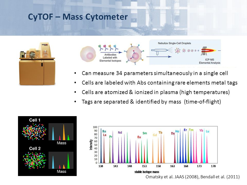 CyTOF – Mass Cytometer Omatsky et al. JAAS (2008), Bendall et al. (2011) Can measure 34 parameters simultaneously in a single cell Cells are labeled w